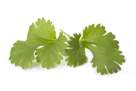 Coriander leaves on white isolated background, closeup photo