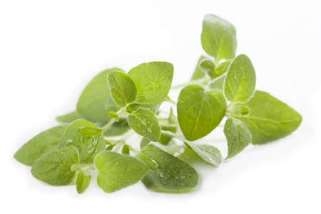 Close up of fresh and green oregano leaves photo