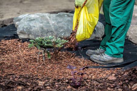 mulch: Mulch and barrier weed protects conifer seedling