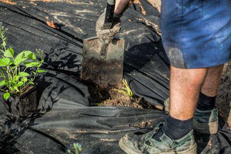 horticulturist: Gardener is digging a hollow for a flower