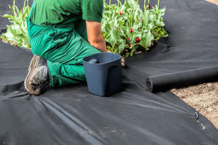 Horticulturist installs special mat which suppress weeds growth