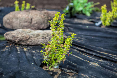 upgrowth: Weed barrier mat protects plants growing