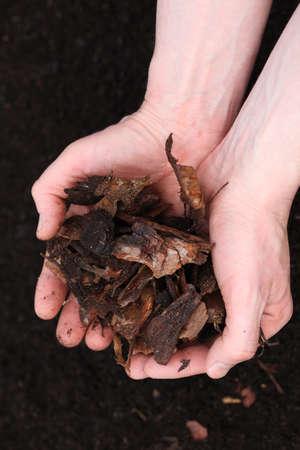 mulch: Gardener checks bark before planting