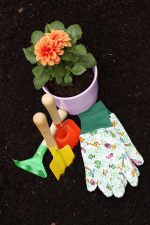 Dahlia in flowerpot and colorful gardening tools Stock Photo - 20994517
