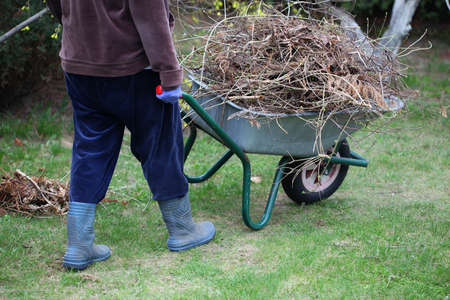 barrow: Gardener removes pile of branches from garden with wheelbarrow Stock Photo