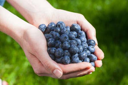 handful: Freshly picked blueberries held in both hands Stock Photo