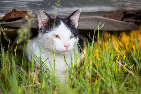 A white cat observing something while hiding in the grass photo