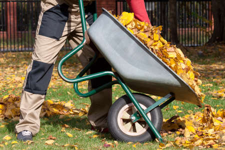 barrow: Man with a wheelbarrow during autumn cleannig in the garden