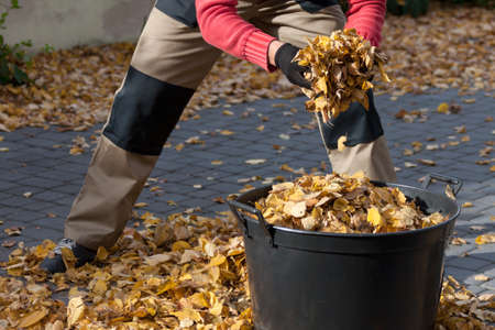 neighbourhood: Man cleannig the driveway from autumn leaves Stock Photo
