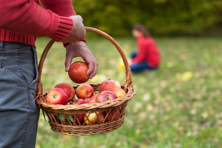 Man collecting autumn apples in garden with his wife photo