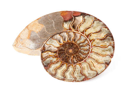 prehistory: Beautiful gold ammonite mineral in shell shape isolated