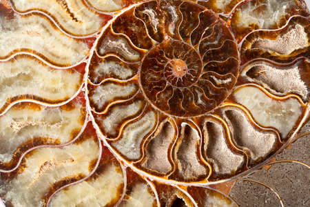 shell pattern: Beautiful golden ammonite mineral in close up Stock Photo