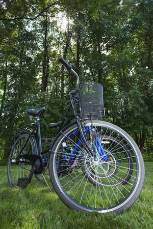 Several bikes in the park or forest photo
