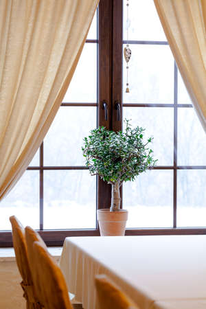 Vertical photo of a green plant in window photo