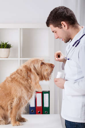 Vet during giving medicament to dog, vertical photo