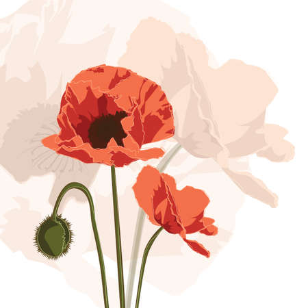 papaver: graphic of red papaver, square card