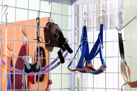 slings: Professional rehabilitation equipment at physiotherapy clinic, horizontal