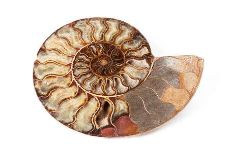 geologic: Ammonite onyx stone on white isolated background Stock Photo