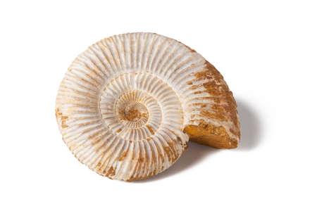 onix: �nice amonita en el fondo blanco aislado