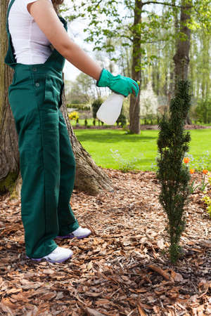 spaying: Woman spaying plants in her garden, vertical