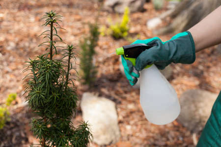 spaying: Horizontal view of spraying plants in garden