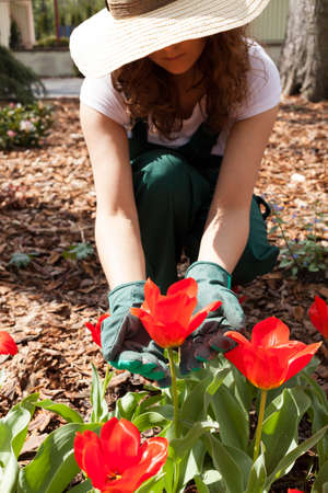 weeding: Female gardener weeding among flowers in garden