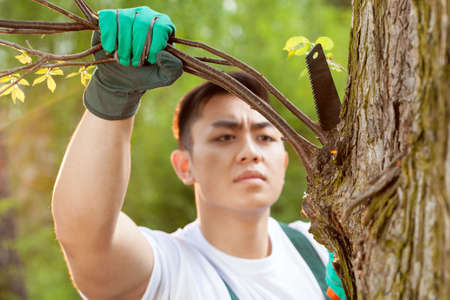 cropping: Asian gardener cropping a branch in forest