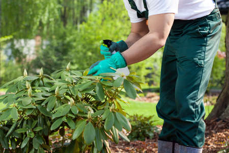 spaying: Horizontal view of a gardener spraying a plant Stock Photo