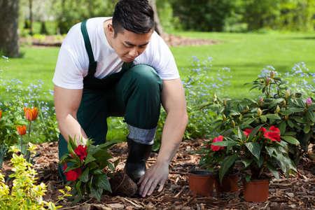 Het planten van bloemen in een prachtige groene tuin Stockfoto