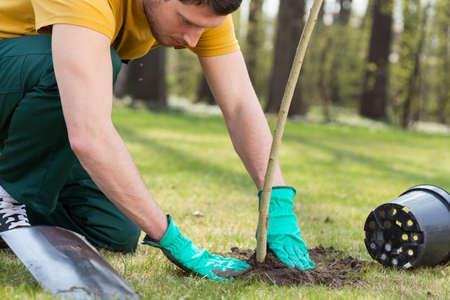 paysagiste: Jeune homme à genoux lors de la plantation d'un arbre