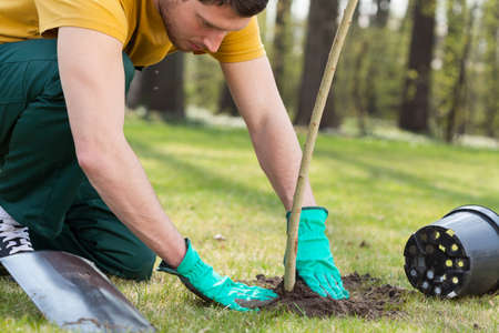 young plant: Young man kneeling during planting a tree Stock Photo