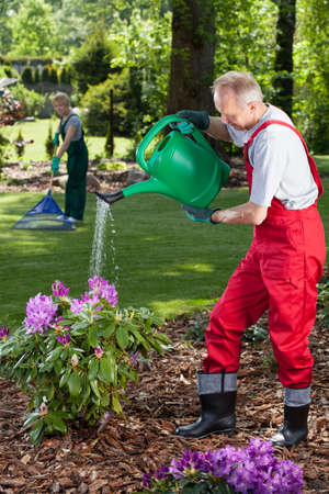 Man watering the flowers when his wife cleans lawn in garden photo