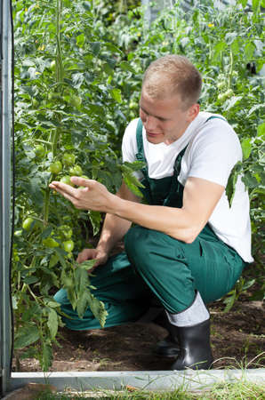 Vertical view of gardener working in greenhouse