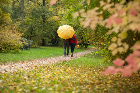 walk in: Couple with umbrella during autumn walk in the forest
