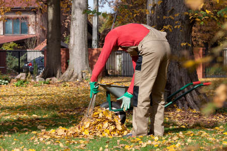 rake: A man collecting autumn leaves using a rake and hands Stock Photo