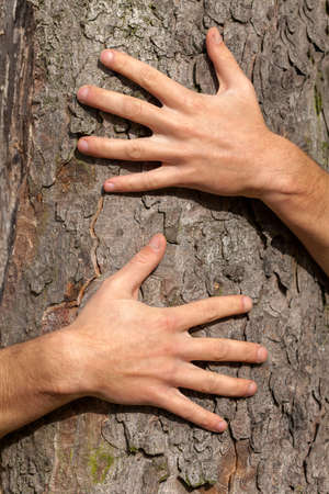 grabbing hand: A close up of hands sticked to a tree trunk