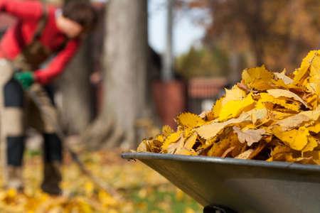 carretilla: Vista de las hojas otoñales en un jardín
