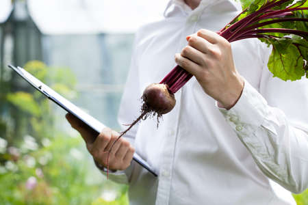 quality controller: Quality controller keeping clipboard and checking beet condition Stock Photo