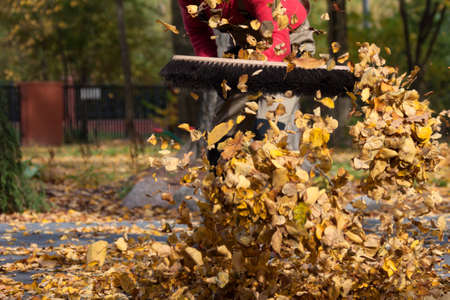 brooming: Lots of leaves in a garden, horizontal