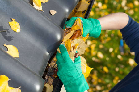 during: Leaves in a rain gutter during autumn