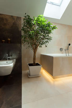 モダンなバスルームは、垂直方向のラッキー ツリー 写真素材