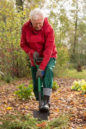 hardworking: Elderly hardworking man digging his garden in autumn afternoon Stock Photo