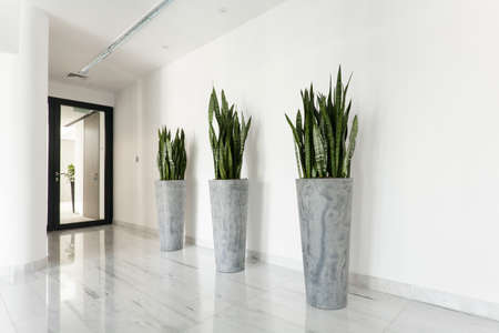 polished floor: Beauty plants on corridor in business office