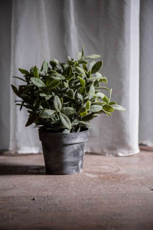 untidiness: Fake plant on wooden dirty and dusty floor