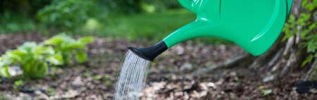regar las plantas: Jardinero plantas en primavera soleado riego