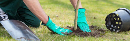 gardening gloves: Young man kneeling during planting a tree Stock Photo