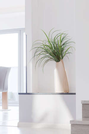 Picture of houseplant in contemporary white interior photo