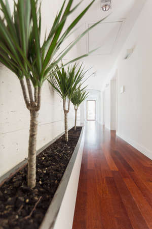 corridors: White corridor with wooden floor in new big house