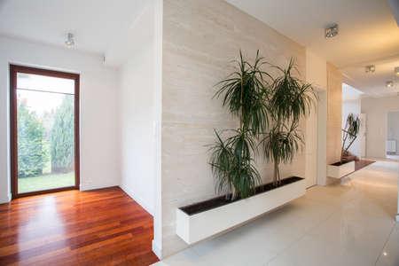 residence: Houseplants in bright hall in modern residence