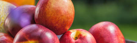 canasta de frutas: Primer plano de las nectarinas maduras jugosas frescas en la cesta